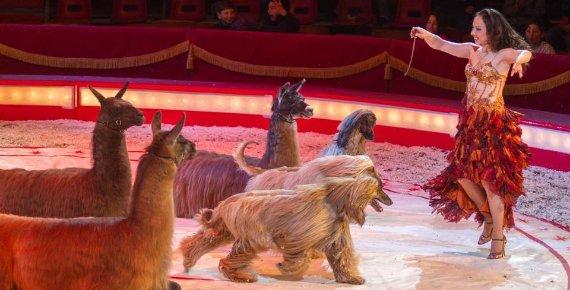 Lístek do cirkusu BERNES v Ostravě na Černé louce