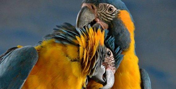 Rodinná vstupenka do Zoo v Hodoníně