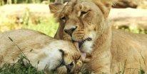 Rodinná vstupenka do Zoo Brno