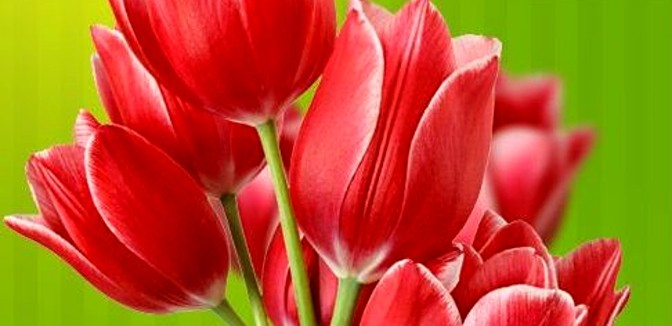 ilustrační obrázek ke slevové akci: Poukaz v hodnotě 300 Kč do květinářství BAPEL